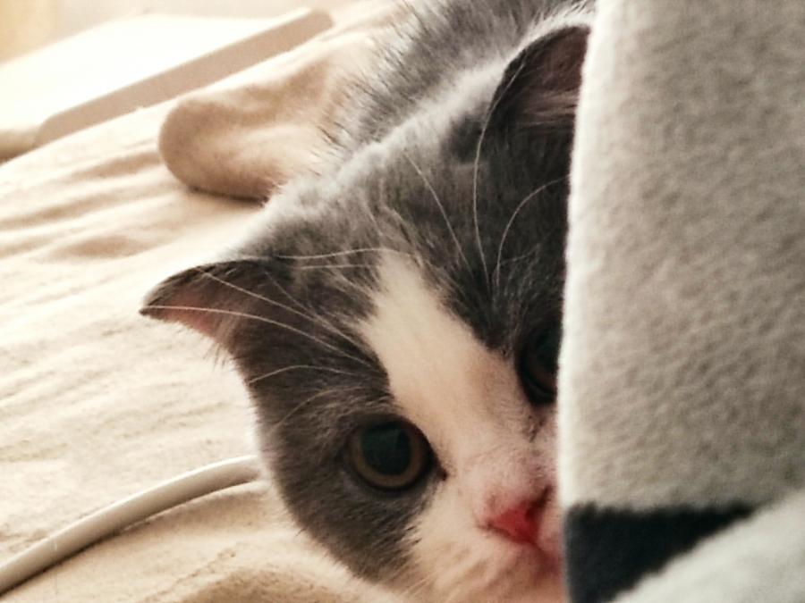 萌兽医馆宣布完成B2轮融资 资本涌入宠物医疗